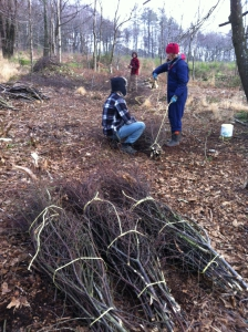 Volunteers Collecting Firewood
