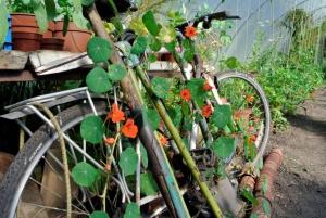 Bike in polytunnel