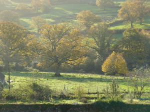 Another Autumnal Monkton
