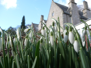 Snowdrops and Monkton