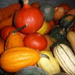 A Selection of Garden Squashes